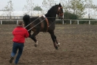 trainingswe-doppellonge-fahren-ungarn-10