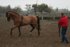 trainingswe-doppellonge-fahren-ungarn-12