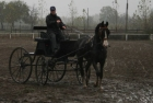 trainingswe-doppellonge-fahren-ungarn-13