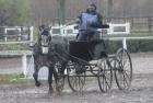 trainingswe-doppellonge-fahren-ungarn-14