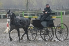 trainingswe-doppellonge-fahren-ungarn-16