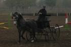 trainingswe-doppellonge-fahren-ungarn-3