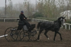 trainingswe-doppellonge-fahren-ungarn-4