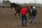 trainingswe-doppellonge-fahren-ungarn-9