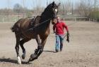 training-saison-kecskemet-33