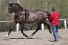 training-saison-kecskemet-35