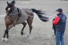 training-saison-kecskemet-5