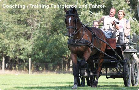 Marco Hildebrandt   Coaching und Training f�r Fahrpferde und Fahrer.
