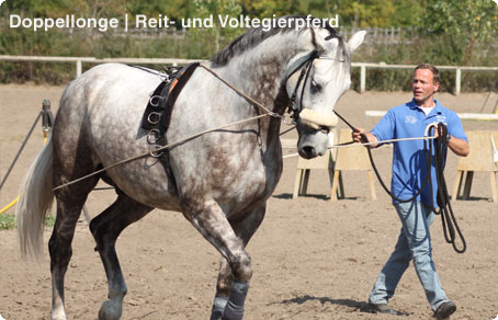 Marco Hildebrandt | Doppellonge | Reit- und Voltegierpferd.