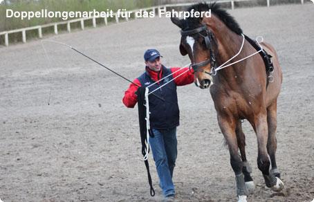 Marco Hildebrandt | Doppellongenarbeit für das Fahrpferd.