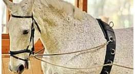 Bericht Burgenländischer Pferdesportverband